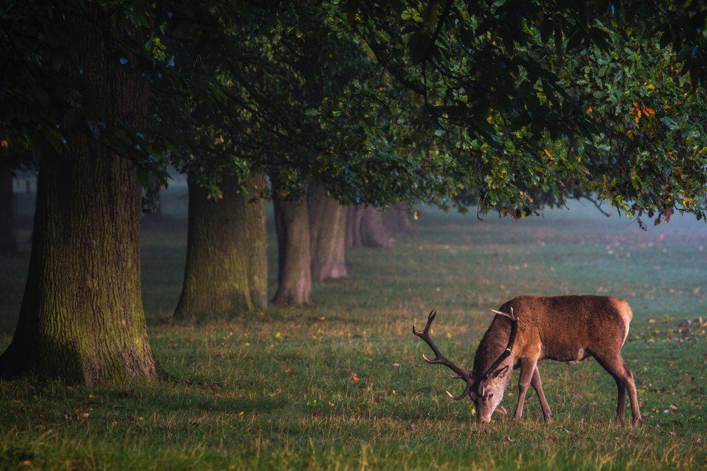 Hjortjaktstips - 10 sätt att nå framgång i sin hjortjakt
