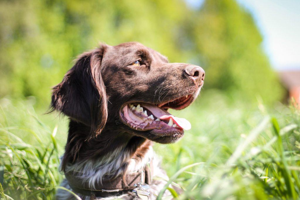 Regler vid jakt med hund